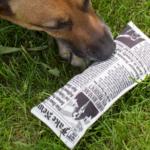 Fake News Krant Hondenspeeltje