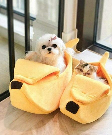 Bananenschil Kattenmandje