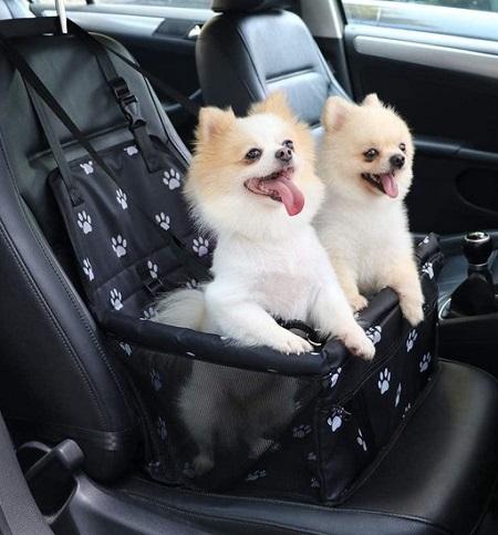 Autostoel Hond – Incl Opvouwbaar Voerbakje en Borstel