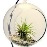 Plantje In Een Glazen Bol
