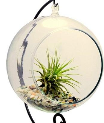 plantje-in-glazen-bol