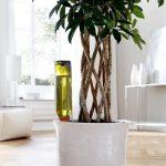 Plantbewateringssyteem - Druppelaar Planten