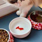 Waterbak Kat met 3D Vis