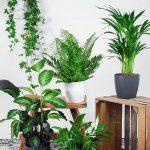 Makkelijke en Luchtzuiverende Kamerplanten Mix