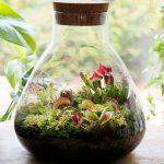Swamp Biosphere Ecosysteem - Moeras in een Potje
