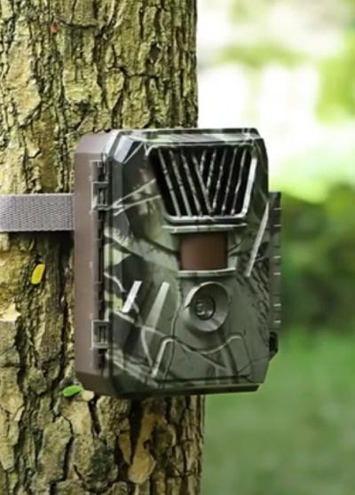 Wildcamera aan een boom in de natuur.