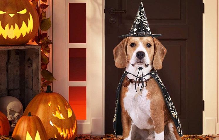 Heks hondenpakje Halloween.